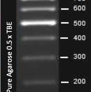 Elite 100 bp DNA ladder
