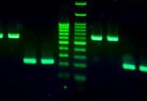 Magnite Green DNA stain