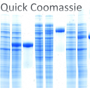 Quick Coomassie Stain (1L)